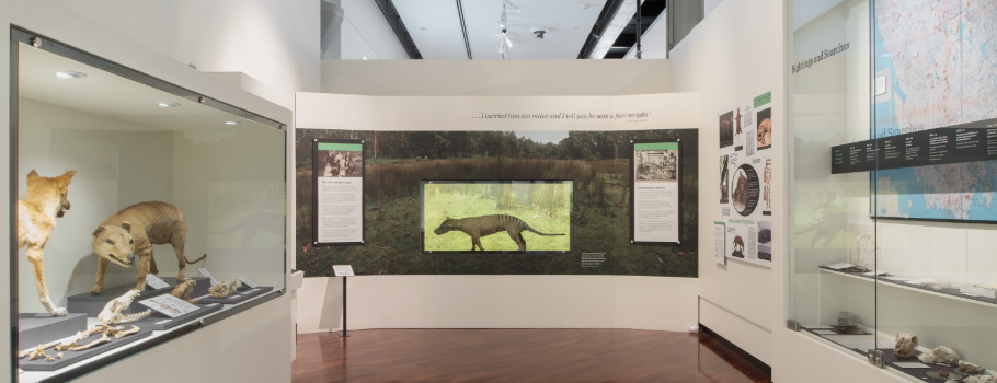 Tasmanian-Tiger-Precious-Little-Remains-Exhibition-QVMAG-City-of-Launceston.png